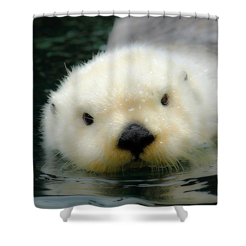 Otter Shower Curtain Featuring The Photograph White By Steve McKinzie