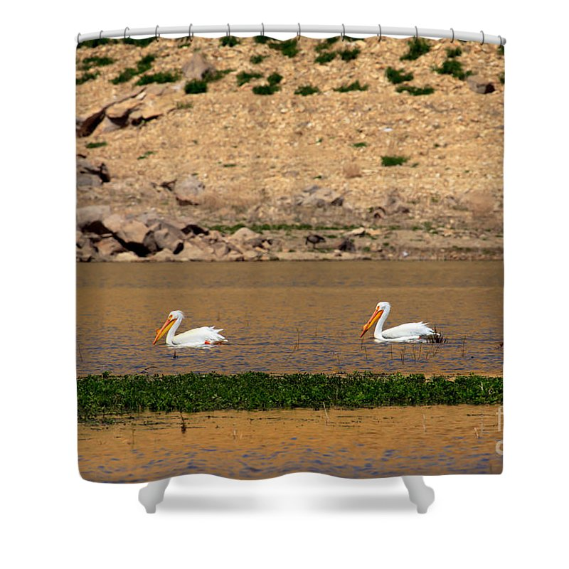 Birds Shower Curtain featuring the photograph White Pelicans by Robert Bales