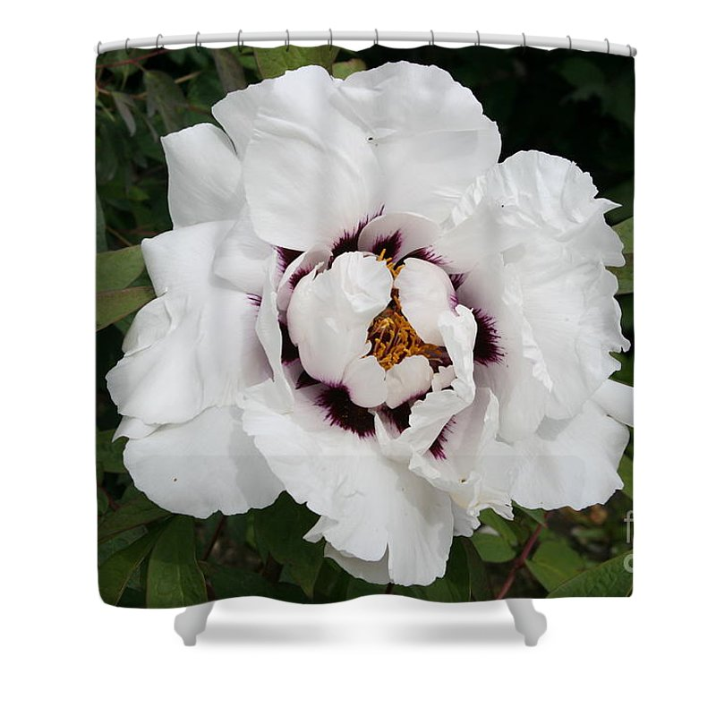 Flowers Shower Curtain featuring the photograph White Peony by Christiane Schulze Art And Photography