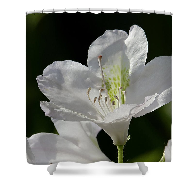 White Shower Curtain featuring the photograph White Rhododendron by David Freuthal