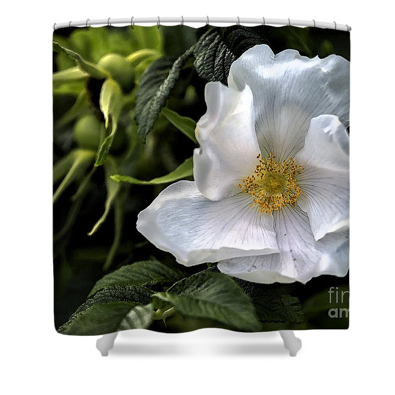 Rose Shower Curtain featuring the photograph White Rose by Belinda Greb