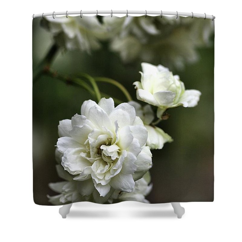 Plant Shower Curtain featuring the photograph White Roses by Joy Watson
