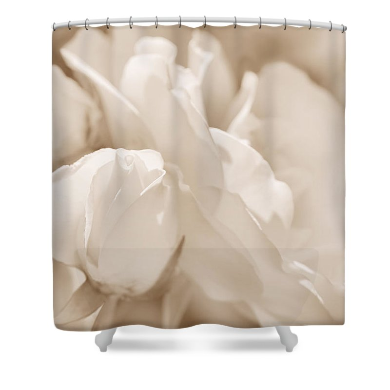 Rose Shower Curtain featuring the photograph White Roses Soft Brown by Jennie Marie Schell