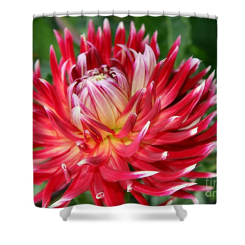 Dahlia Shower Curtain featuring the photograph White Spires by Christiane Schulze Art And Photography