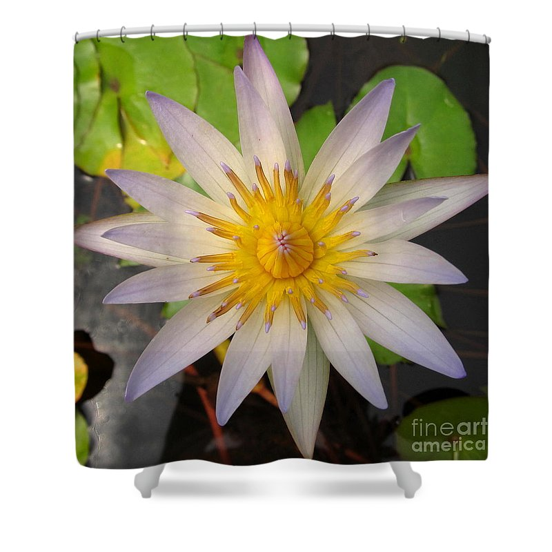 White Star Lotus White Lotus Flower Aquatic Flowers Aquatic Flora Aquatic Plants Water Garden Flora Pond Plants White Water Lily Lotus Blooms Lotus Blossoms Divine Design In Nature Rare Flowers Exotic Flora Beautiful Being Shower Curtain featuring the photograph White Star Lotus by Joshua Bales