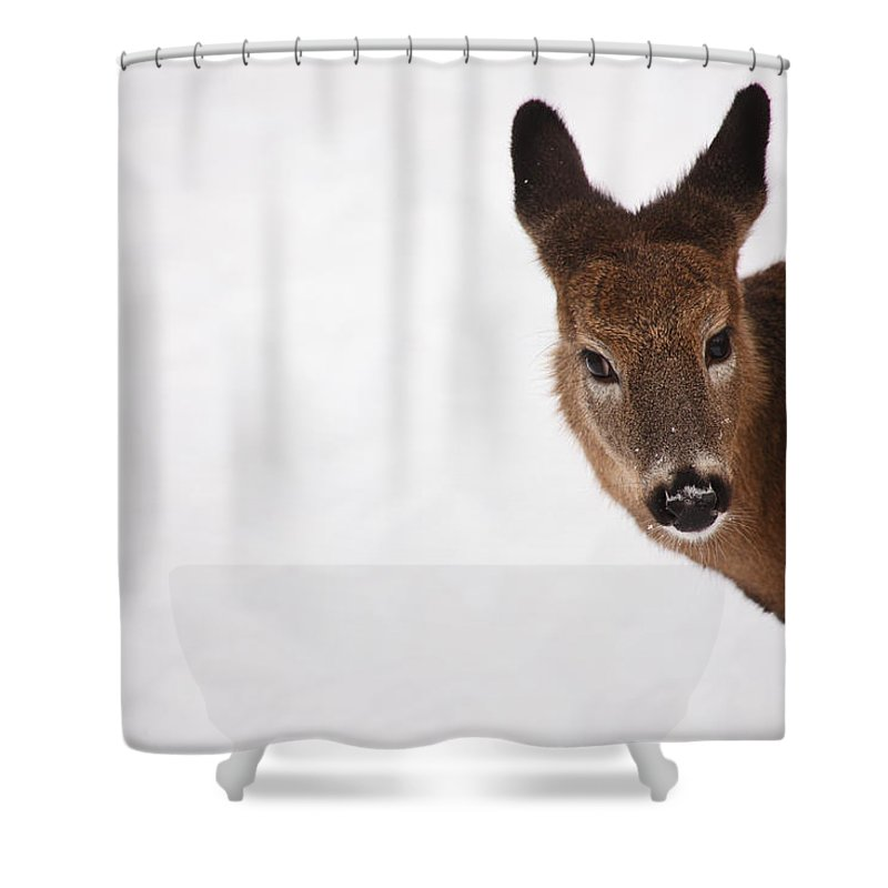 Deer Shower Curtain featuring the photograph White Tail Babe by Karol Livote