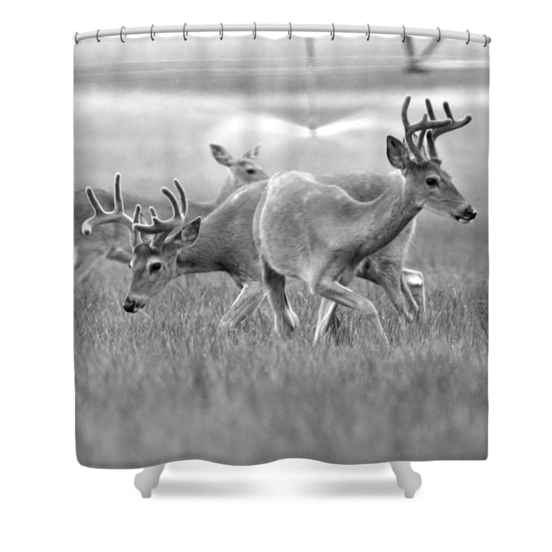 White Tailed Buck Shower Curtain featuring the photograph White Tail Shower by Steve McKinzie