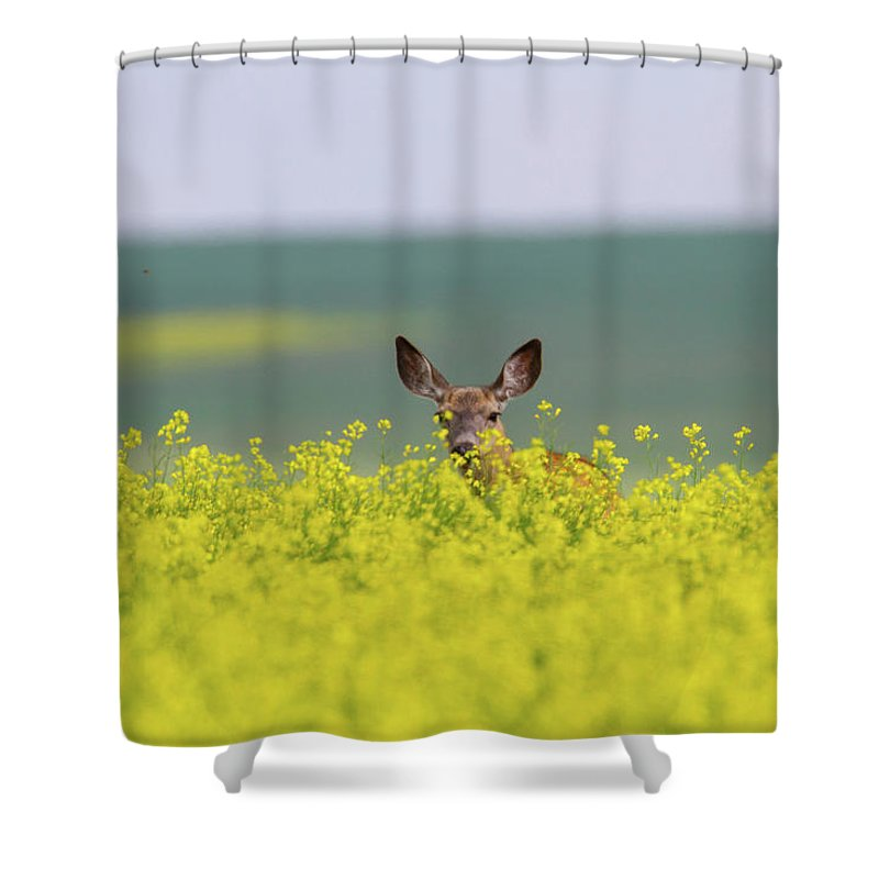 Alertness Shower Curtain featuring the photograph White-tailed Doe by Ed Matuod