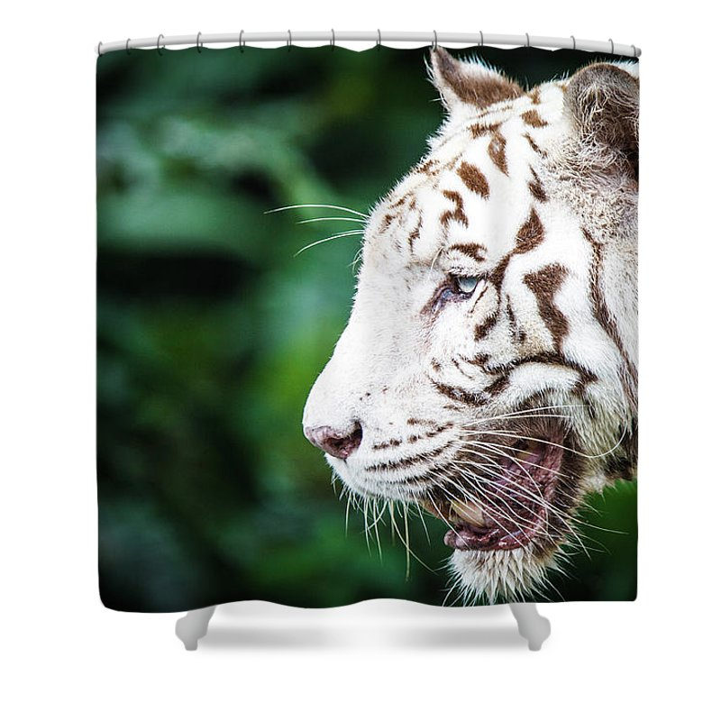 Snarling Shower Curtain featuring the photograph White Tiger by Tony Kh Lim