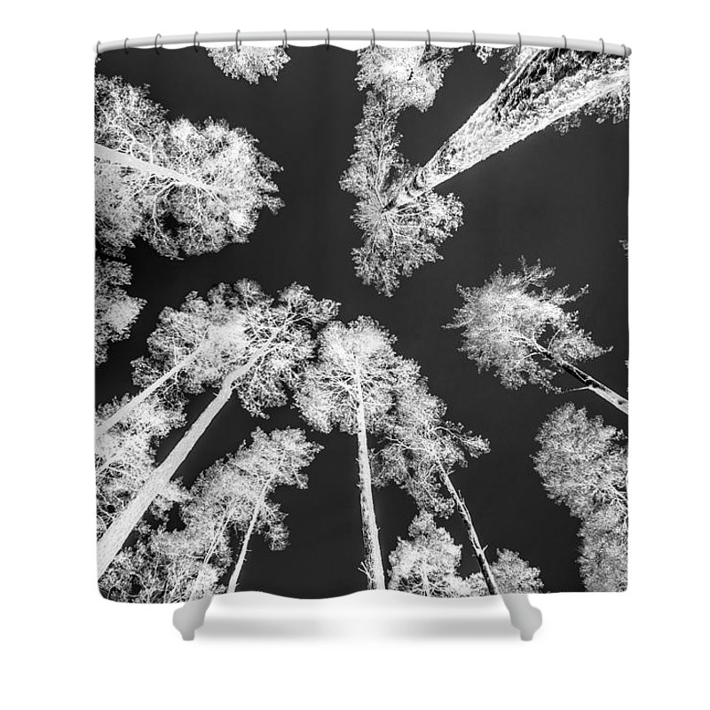 Trees Shower Curtain featuring the photograph White Trees by Hakon Soreide