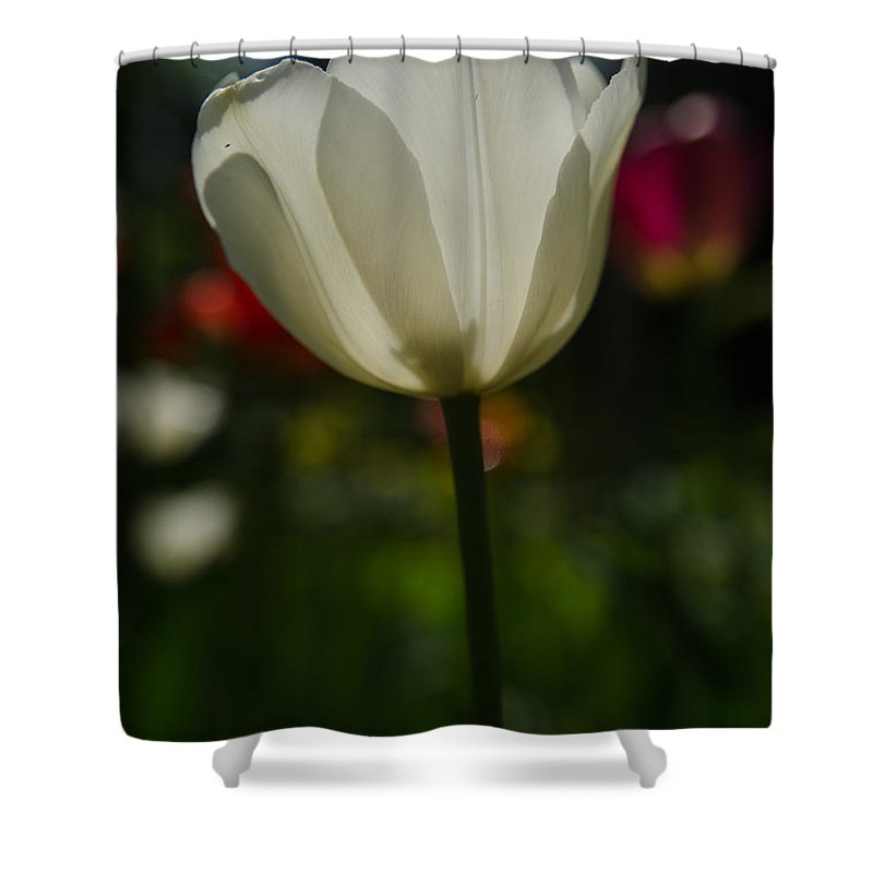 Backlit Shower Curtain featuring the photograph White Tulip by Michael Goyberg
