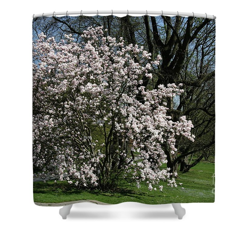 Tree Shower Curtain featuring the photograph White Tulip Tree by Christiane Schulze Art And Photography