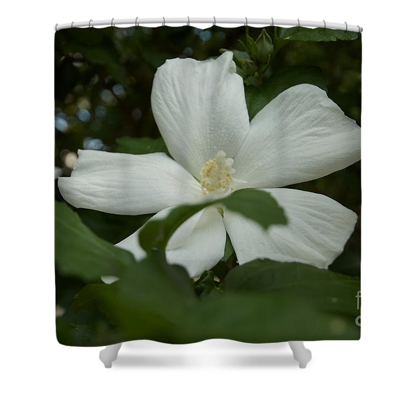 Flowers Shower Curtain featuring the photograph White by William Norton