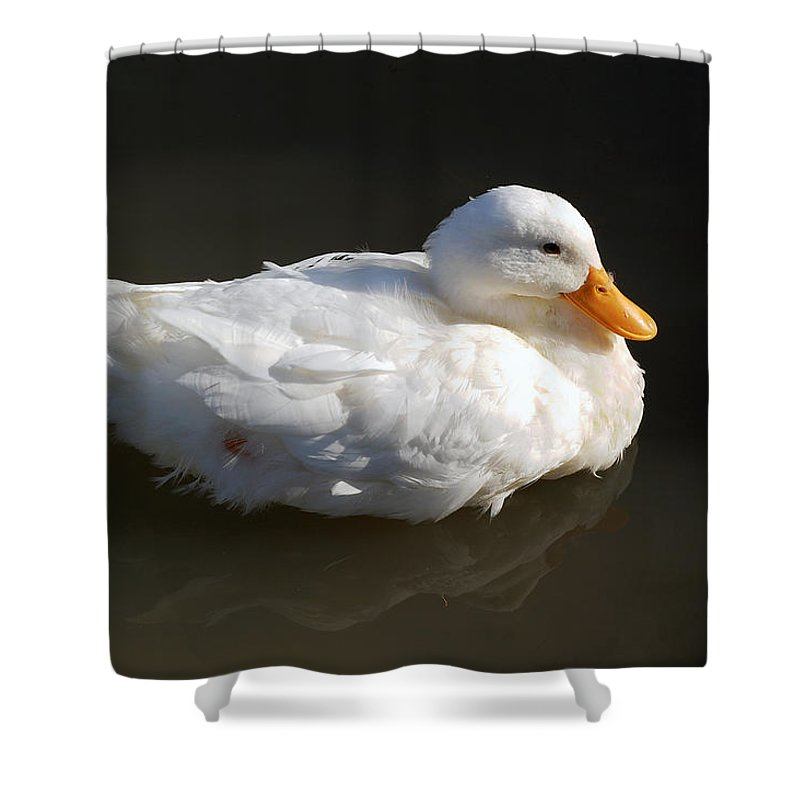 Duck Shower Curtain featuring the photograph White Wings by Leticia Latocki