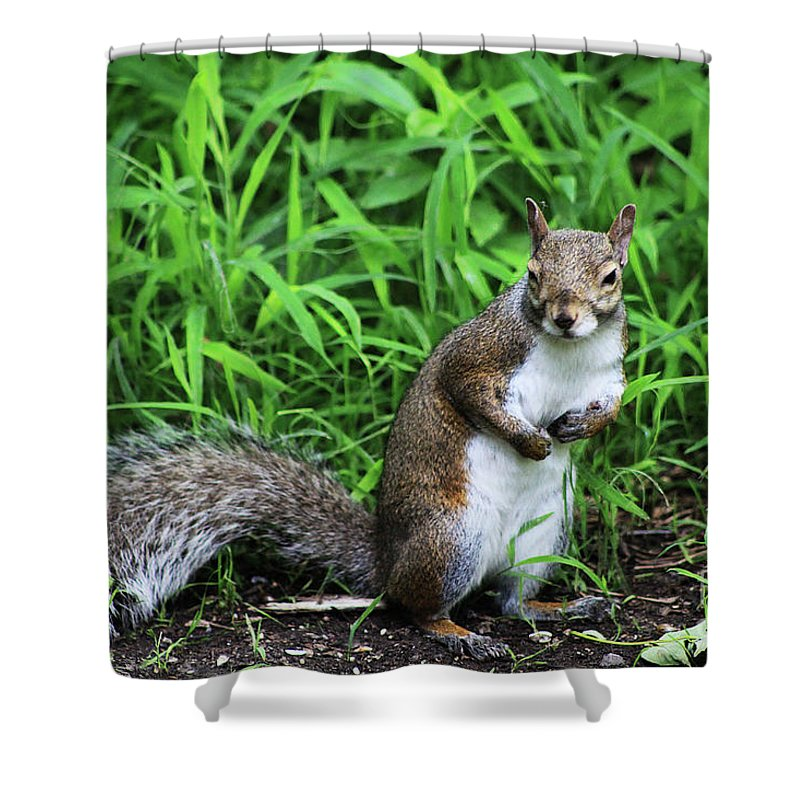 Squirrel Shower Curtain featuring the photograph Who Me by Alyce Taylor