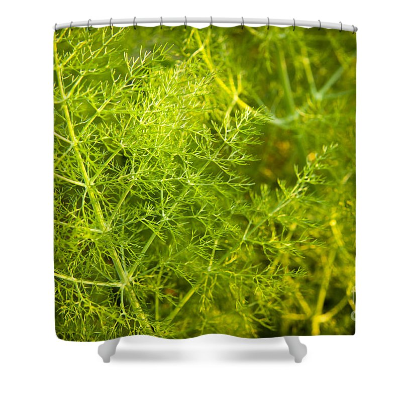 Aline Shower Curtain featuring the photograph Wild Aniseed by Tim Hester