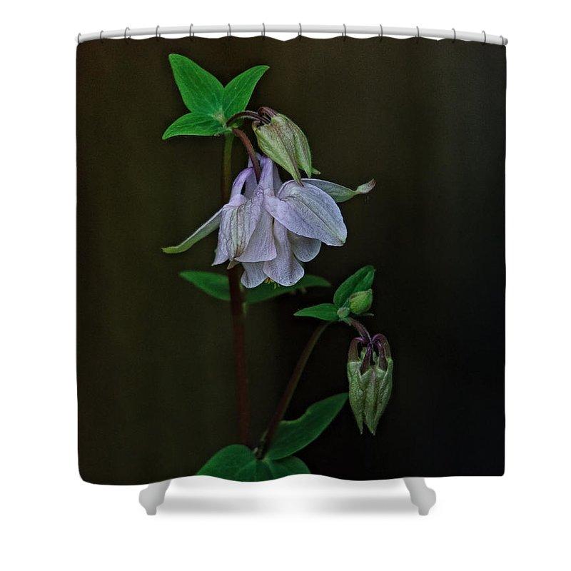 Aquilegia Photographs Shower Curtains
