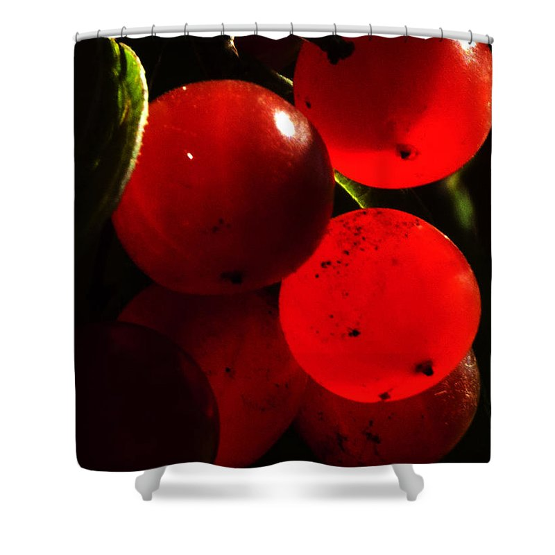 Wild Berries Shower Curtain featuring the photograph Wild Berries Of The Wetlands 4 by Verana Stark