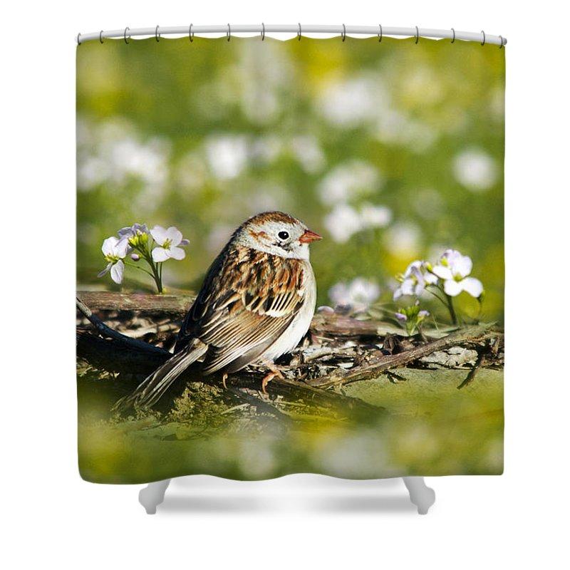 Bird Shower Curtain featuring the photograph Wild Birds - Field Sparrow by Christina Rollo