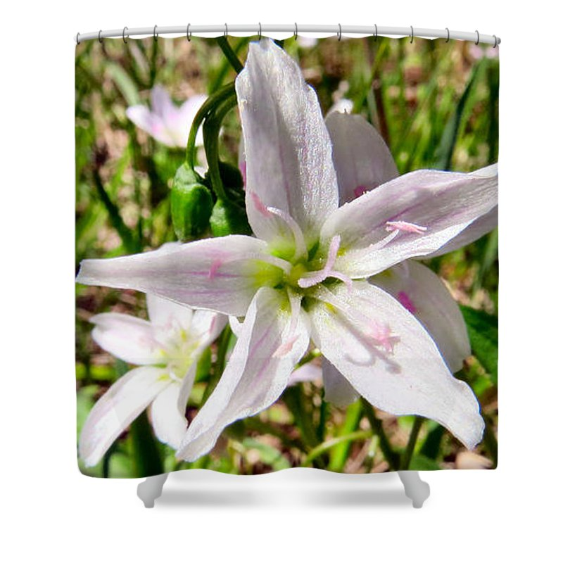 Pink Shower Curtain featuring the photograph Wild Flowers by Art Dingo