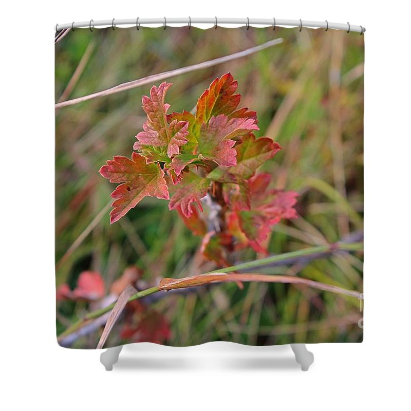 Fall Shower Curtain featuring the photograph Wild Gooseberry Leaves by Ann E Robson