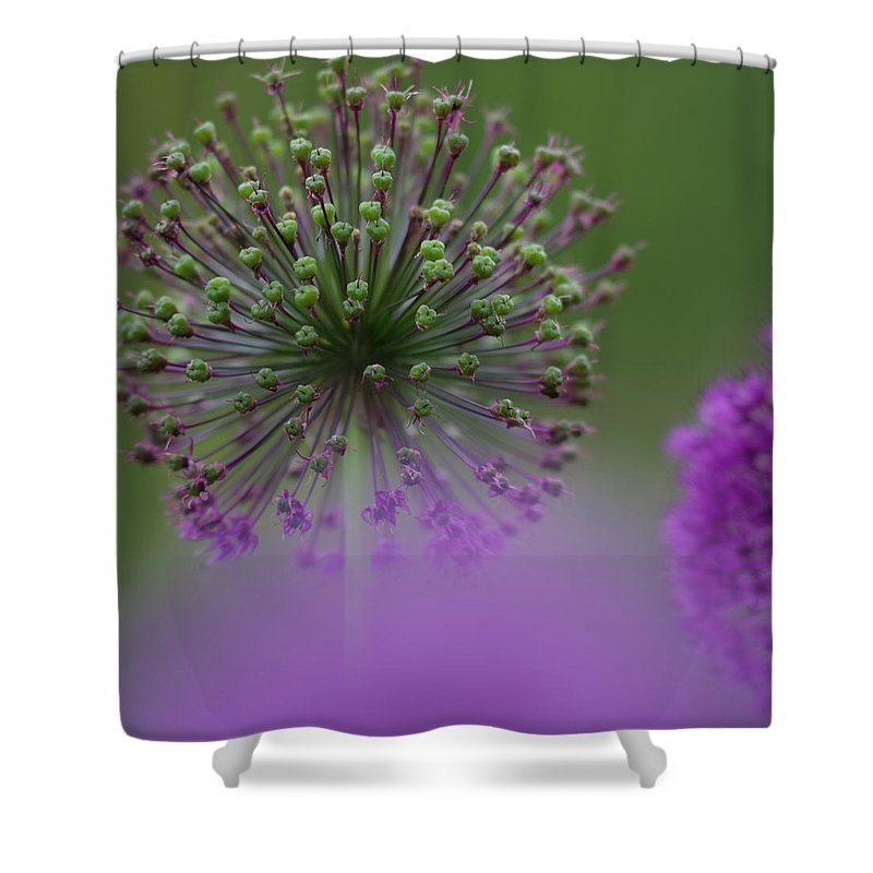 Allium Shower Curtain featuring the photograph Wild Onion by Heiko Koehrer-Wagner