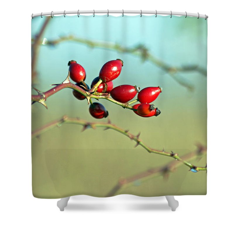 Flora Shower Curtain featuring the photograph Wild Rose Hips by Tony Murtagh