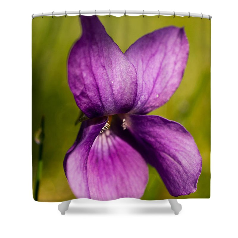 Violet Shower Curtain featuring the photograph Wild Violet by Brothers Beerens
