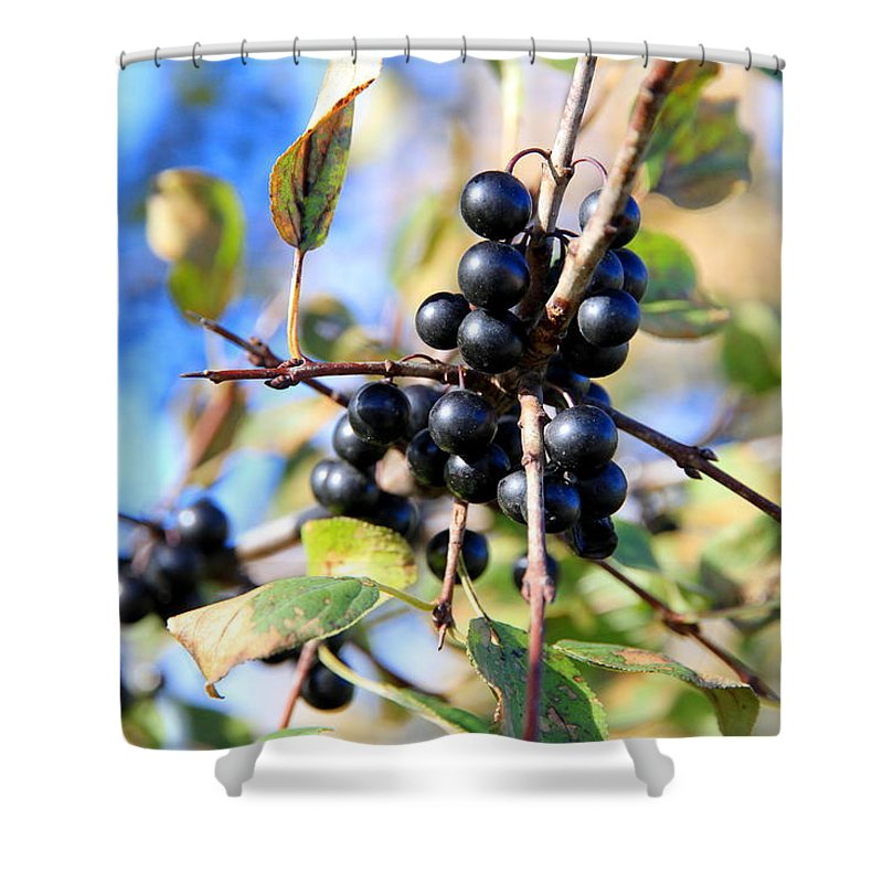Wildberry Shower Curtain featuring the photograph Wildberry Plant by Valentino Visentini