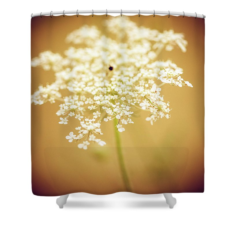Creativity Shower Curtain featuring the photograph Wildflower by Jeja