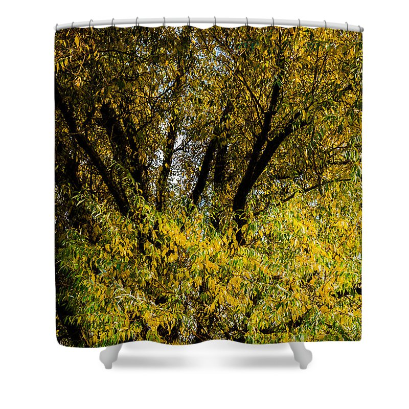 Autumn Shower Curtain featuring the photograph Willow Tree by Alexander Senin