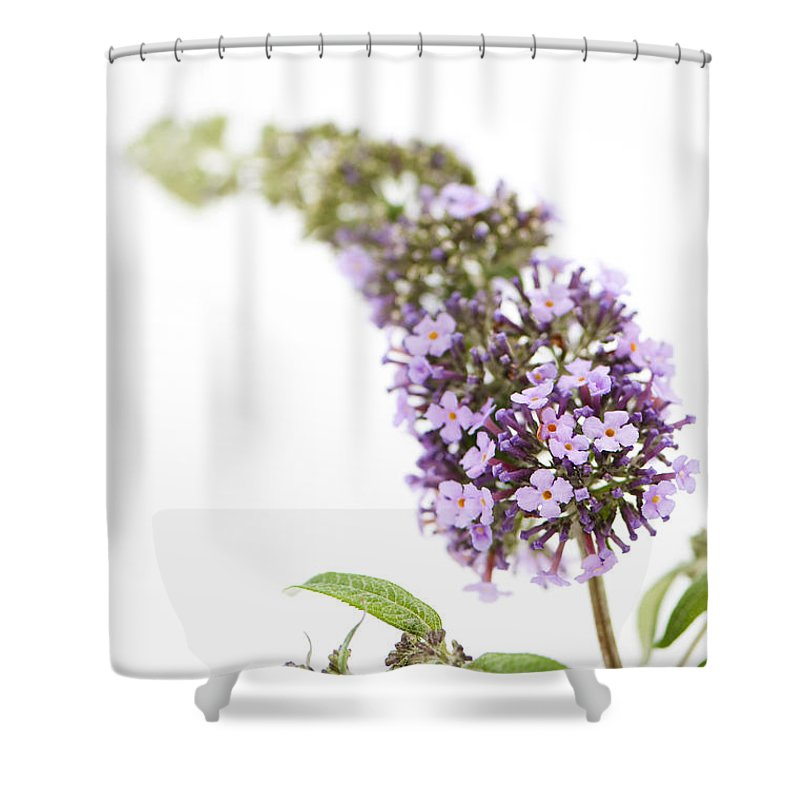 Abstract Shower Curtain featuring the photograph Windfall by Anne Gilbert