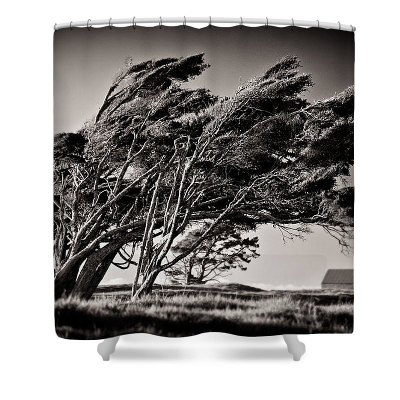 Windswept Trees Shower Curtain featuring the photograph Windswept by Dave Bowman