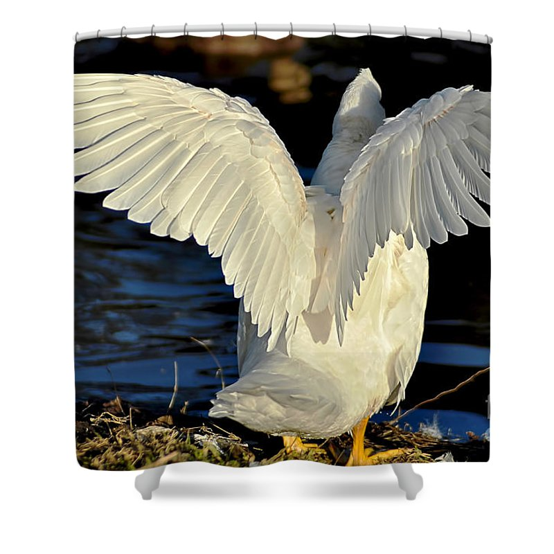 Photography Shower Curtain featuring the photograph Wings Of A White Duck by Kaye Menner