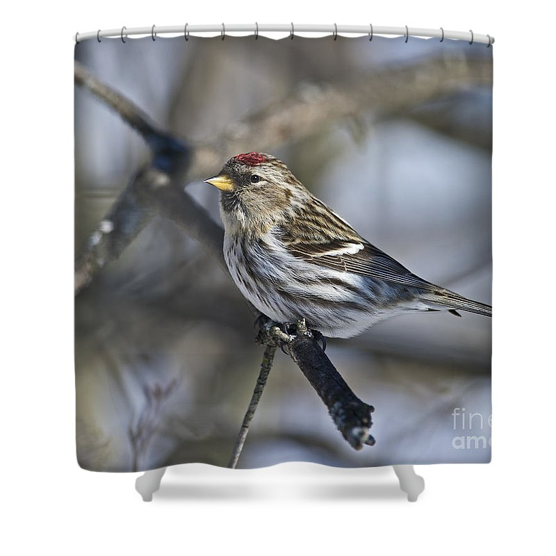 Festblues Shower Curtain featuring the photograph Winter Beauty.. by Nina Stavlund