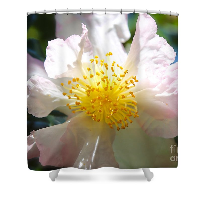 Camellia Shower Curtain featuring the photograph Winter Camellia by Carol Groenen