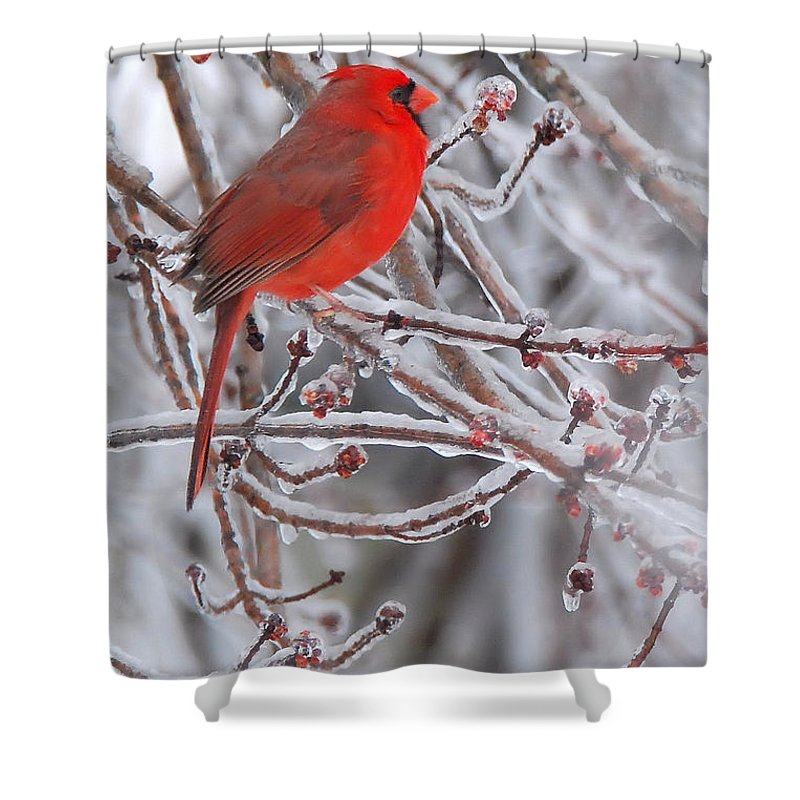 Cardinal Shower Curtain featuring the photograph Winter Chill by Dianne Sherrill