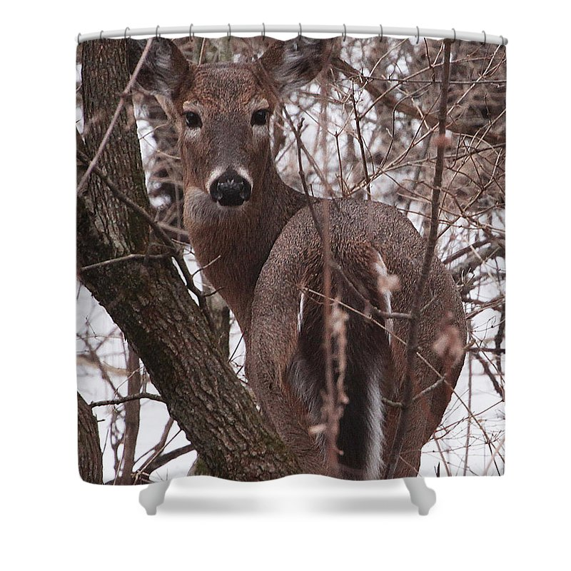 Deer Shower Curtain featuring the photograph Winter Deer by Mike Dickie