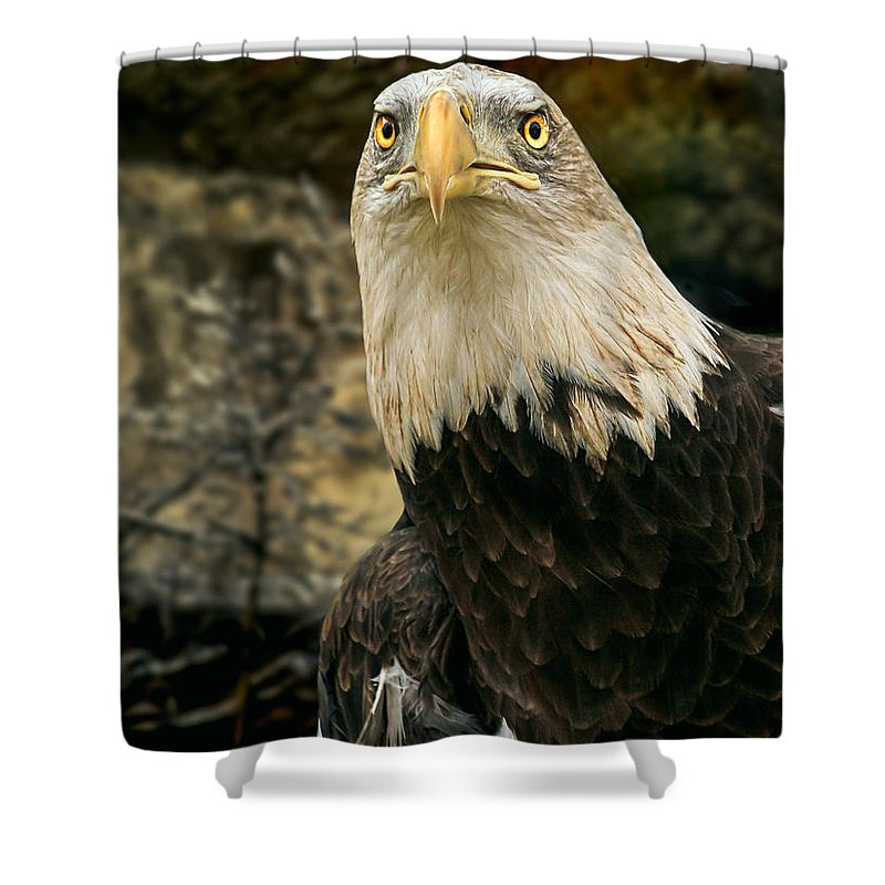Eagle Shower Curtain featuring the photograph Winter Eagle by Bob Orsillo