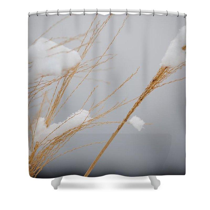 Grasses Shower Curtain featuring the photograph Winter Grasses Iv by Karen Lambert