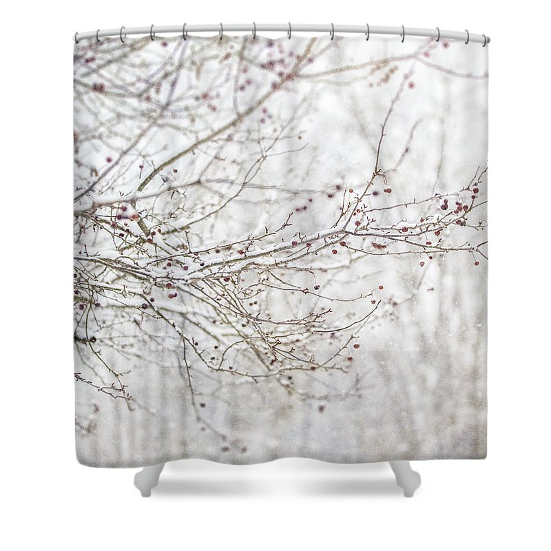 White Shower Curtain Featuring The Photograph Winter Of Snow On Cherry Tree Branches By Lisa