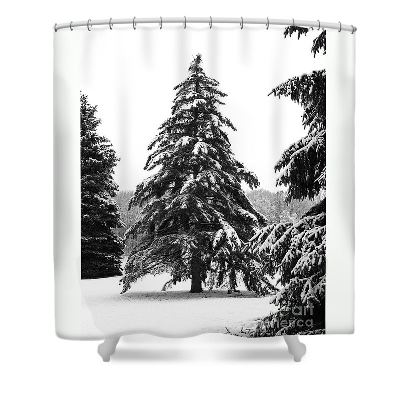 Winter Shower Curtain featuring the photograph Winter Pines by Ann Horn