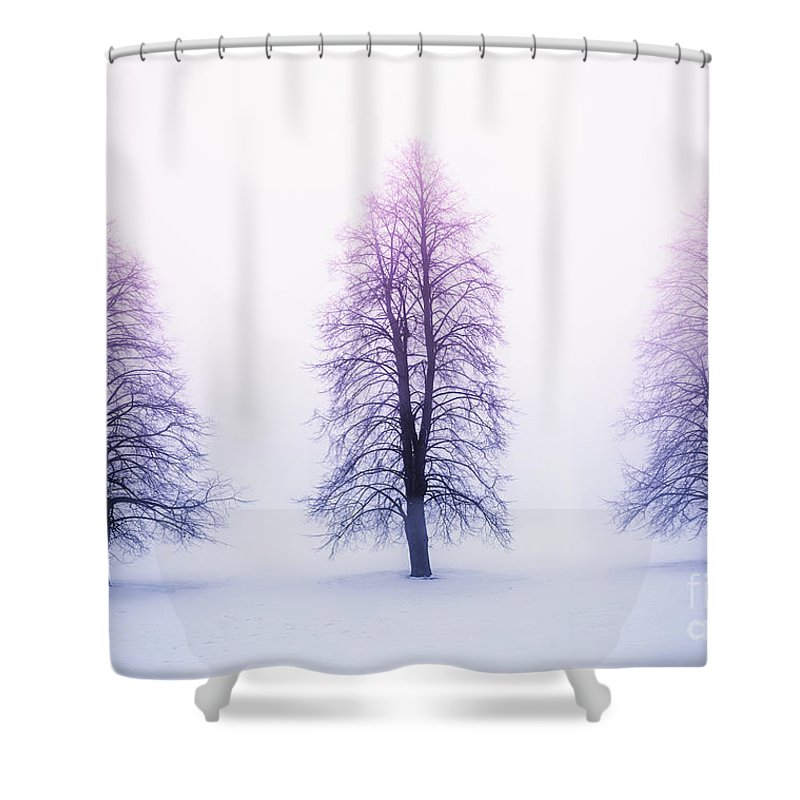 Trees Shower Curtain featuring the photograph Winter trees in fog at sunrise by Elena Elisseeva