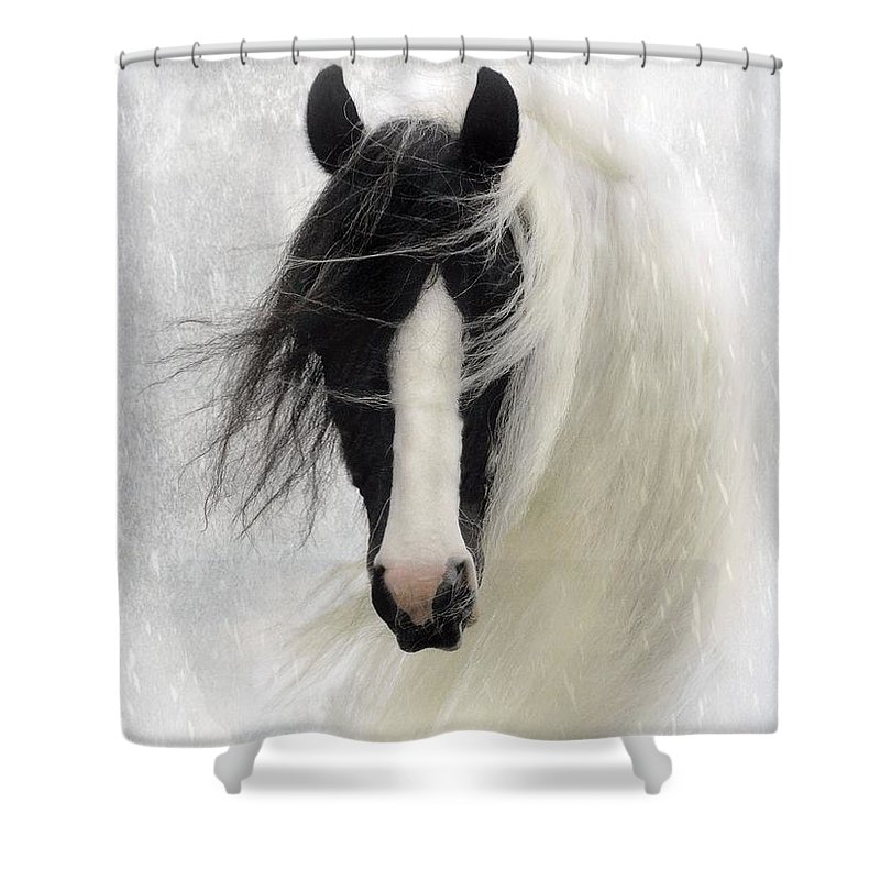 Horses Shower Curtain featuring the photograph Wisteria by Fran J Scott