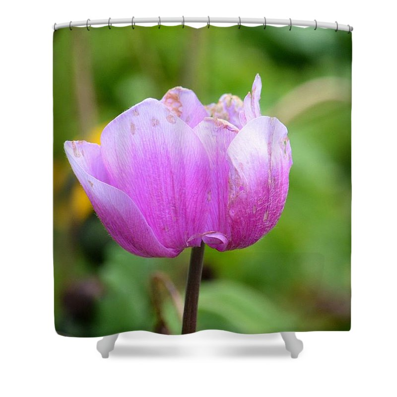 Wistfully Pink Shower Curtain featuring the photograph Wistfully Pink by Maria Urso