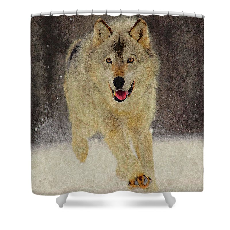 Wolf Shower Curtain featuring the photograph Wolf 1 by Ingrid Smith-Johnsen