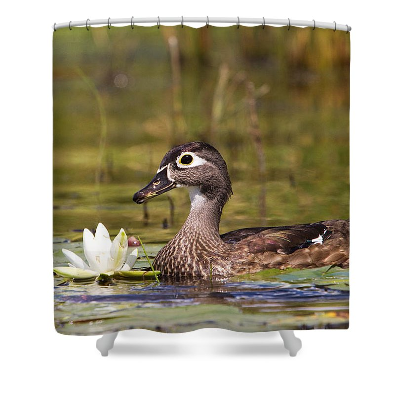 Duck Shower Curtain featuring the photograph Wood Duck by Stephanie McDowell