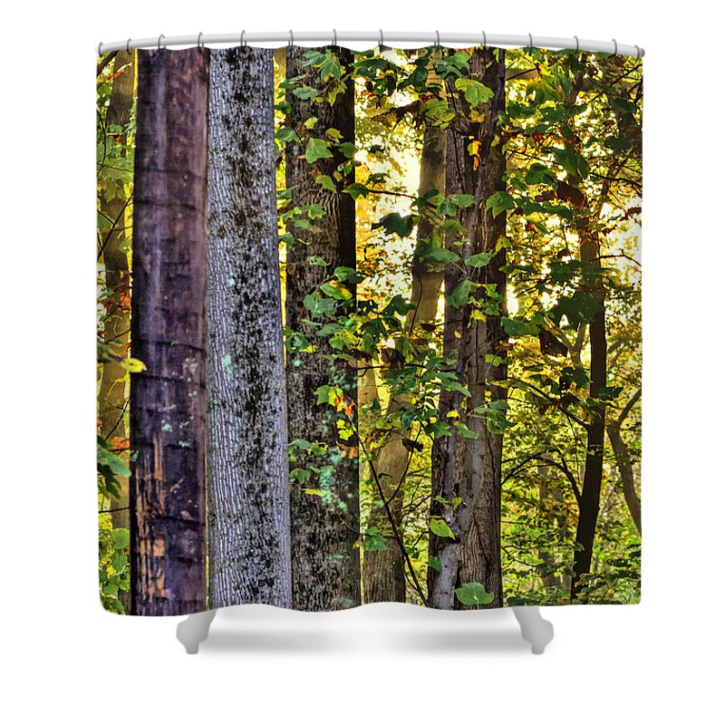 Hdr Shower Curtain featuring the photograph Woodland Morning by Mother Nature