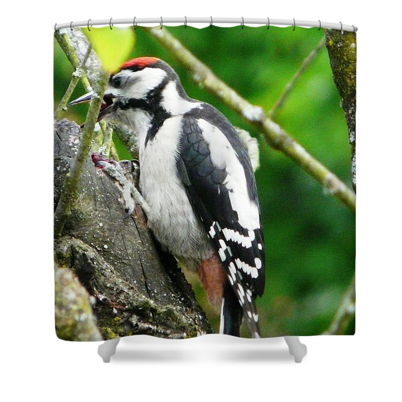 Bird Shower Curtain featuring the photograph Woodpecker Swallowing A Cherry by Valerie Ornstein