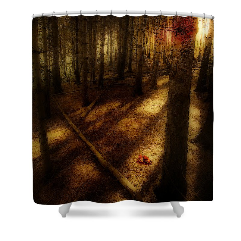 Woods Shower Curtain featuring the photograph Woods With Pine Cones by Meirion Matthias